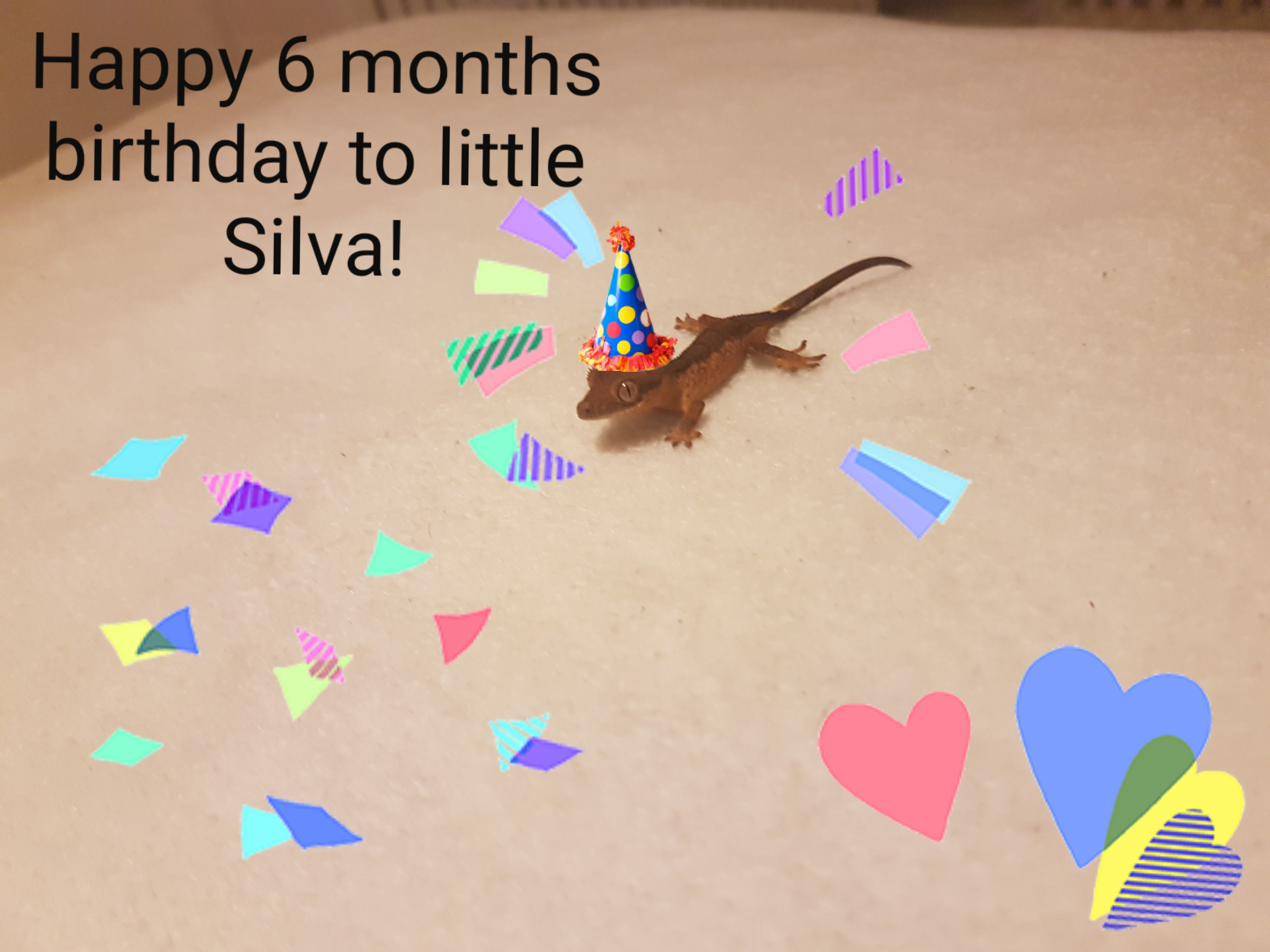 Silva 6 months birthday